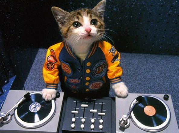 DJ Kitty at the club.png